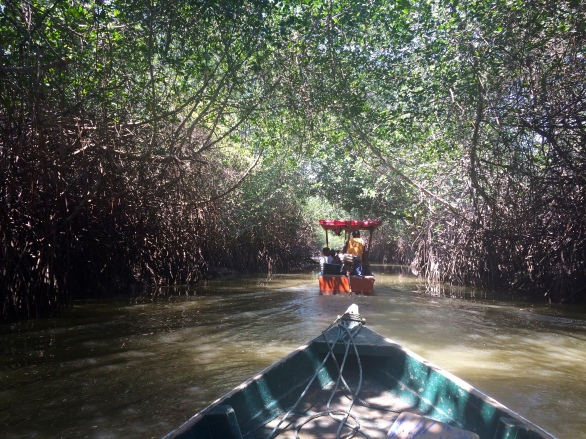 Touring the mangroves